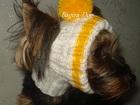 Фотография в Собаки и щенки Одежда для собак Шапочки связаны из двойной мохеровой нити, в Москве 0