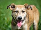 Свежее foto  Очаровательный щенок Монро ищет семью 36764302 в Москве