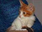 Новое foto  Отдадим в добрые руки чудесных котят 37258640 в Москве