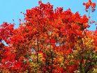 Скачать бесплатно фотографию  Покос травы, обработка от сорняков, обработка от клещей, уничтожение короеда, вспашка земли, бурение скважины на воду, расчистка участков, удаление деревьев 37328199 в Красноармейске
