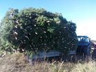 Фотография в   Мы предлагаем большой выбор живых зеленых в Пензе 85