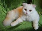 Уникальное foto  Четверо котят в добрые руки, 37449258 в Москве