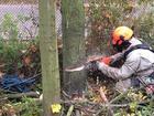 Свежее фото  Спилить дерево уже сегодня! 37462418 в Москве
