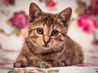 Фото в   Сладкий котенок Нюша ищет дом. Девочка. Возраст в Москве 0