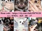 Фото в Собаки и щенки Продажа собак, щенков С документами и без продаются чистокровные в Москве 0