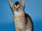 Фотография в Кошки и котята Продажа кошек и котят Осталось два прекрасных котика. Яркие красивые в Москве 0