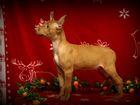 Фотки и картинки Фараонова собака смотреть в Москве