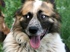 Фото в Собаки и щенки Продажа собак, щенков Марат - очень красивый пес, был найден на в Москве 0