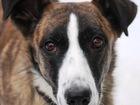 Фото в   Пристраиваю необыкновенную, особенную собаку. в Москве 0