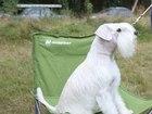 Изображение в Собаки и щенки Вязка собак Кобель для ВЯЗКИ! Окрас белый. Возраст 3 в Москве 0