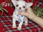 Изображение в Собаки и щенки Продажа собак, щенков В продаже породистый малыш с хорошей родословной. в Москве 55000