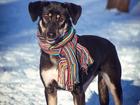 Фото в   Умнейшая собака Берта ищет свою семью!   в Москве 0
