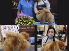 Новое фотографию Услуги для животных БЕСПЛАТНАЯ СТРИЖКА ШПИЦЕВ 39121962 в Москве