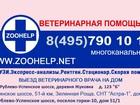 Скачать бесплатно фотографию  Услуги грумера 39362578 в Москве