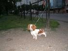 Увидеть изображение Услуги для животных Выгул собак 39546371 в Москве