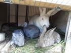 Скачать бесплатно foto  Продажа кроликов 39634676 в Брянске