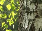 Просмотреть изображение  Расчистка и благоустройство,участков, покос травы, обработка от клещей, обработка от сорняков, удаление деревьев, бурение скважины на воду, валка леса, вспашка 39713574 в Голицыно