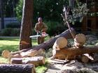 Смотреть изображение  Удаление и обрезка деревьев в Томске 40022196 в Томске