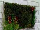 Увидеть фото  Вечно живые, цветы, растения, картины из экзотических растений 40666415 в Москве