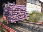 Смотреть изображение  Картофель свежий оптом от производителя 40994985 в Москве