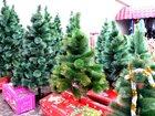 Увидеть изображение  Новогодние живые елки, сосны, искусственные елки оптом, 43901391 в Москве