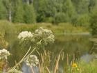 Скачать фото  Зеленая миля, Мокрый корь 50 соток 500 000 руб, 44270378 в Ясногорске
