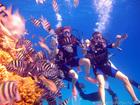 Скачать foto Туры, путевки ДАЙВИНГ В ЭЙЛАТЕ – Красное Море 45098335 в Москве