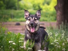 Увидеть фото  Классный пес Ронни в добрые руки, 45833265 в Москве