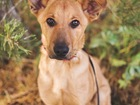Свежее фотографию  Чудесный щенок Тина в добрые руки, 45976610 в Москве