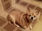 Увидеть foto Отдам даром - приму в дар Отдам собаку в добрые руки 46507874 в Москве