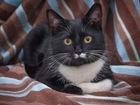 Молодой котик Филипп ищет дом