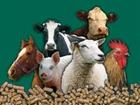 Свежее изображение  ООО ФАВОРИТ Оптовая продажа зерна и кормов 50914105 в Москве