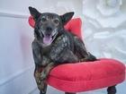 Уникальное изображение  Спокойный добродушный пес ищет семью, 55449750 в Москве