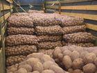Свежее изображение  Картофель оптом от производителя 55999424 в Туле