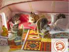 Уникальное foto  Кукольный домик торговой марки БЕЛЬЧИК 57179836 в Москве