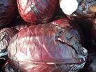 Скачать foto  Продаю капусту краснокочанную, Урожай 2017, Оптом, 60608498 в Ростове-на-Дону