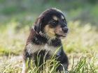 Свежее изображение  Трое очаровательных щенков ищут дом, 66562734 в Москве