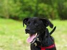 Новое изображение  Ищет дом самая чудесная собака Ирада! 66584649 в Москве