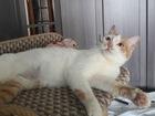Скачать бесплатно изображение  Кошечка -подросток ,Мякушка ищет дом! 67146552 в Москве