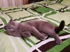 Скачать бесплатно foto  Молодой котик ищет кошечку для вязки 67875219 в Екатеринбурге