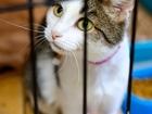 Новое foto  У кошки Лапы, к сожалению, не 9 жизней 68054799 в Москве