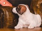 Уникальное фотографию  Очаровательный щенок Коля в добрые руки 68242017 в Москве