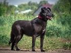 Новое фотографию  Чудесная собака Берта в добрые руки, 68267083 в Москве