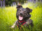 Смотреть foto  Трепетная собака Варя в добрые руки! 68271914 в Москве