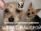 Смотреть фотографию Рекламные и PR-услуги Гостиница для домашних животных 68523497 в Москве