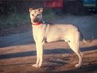 Новое фотографию  Чудесный щенок Купер в добрые руки, 68578981 в Москве