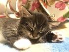 Смотреть фотографию  Девочка-котенок ищет хозяина! 68592769 в Москве