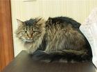 Новое фотографию  Шикарный котик Пуш ищет дом, 69076749 в Москве