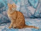 Свежее фото  Солнечный котик Леон ищет новый дом, 69099023 в Москве