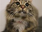 Свежее фотографию  Очаровательная кошечка Марфуша ищет дом, 69183058 в Москве
